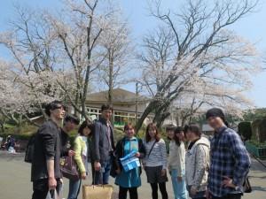 動物園では、桜が満開でした