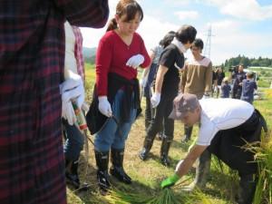 地元農協職員が稲刈りの方法を指導